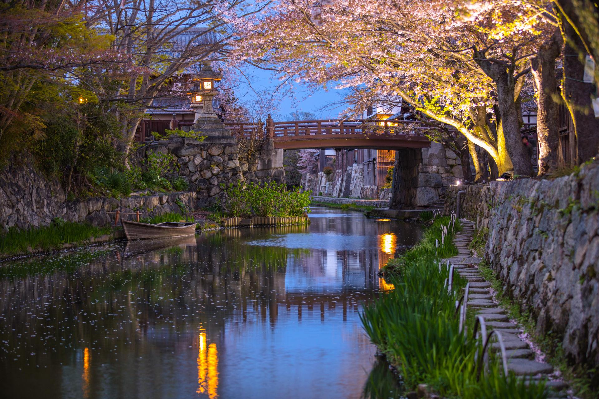 3900223_m 滋賀県  近江八幡 八幡堀(桜と和舟の景色に日本の風情を感じる春におすすめの桜スポット! 写真の紹介、アクセス情報や駐車場情報など)