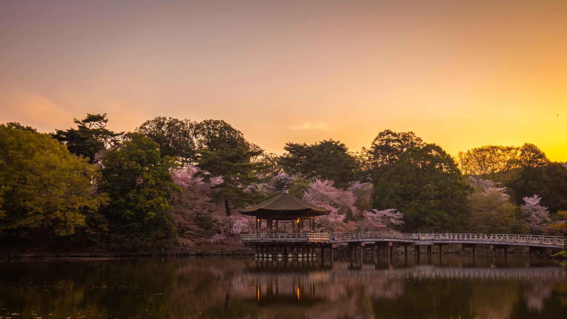 3916081_m 奈良県  奈良公園(鹿と桜の美しい景色が見れる春におすすめの桜スポット! 写真の紹介、アクセス情報や駐車場情報など)