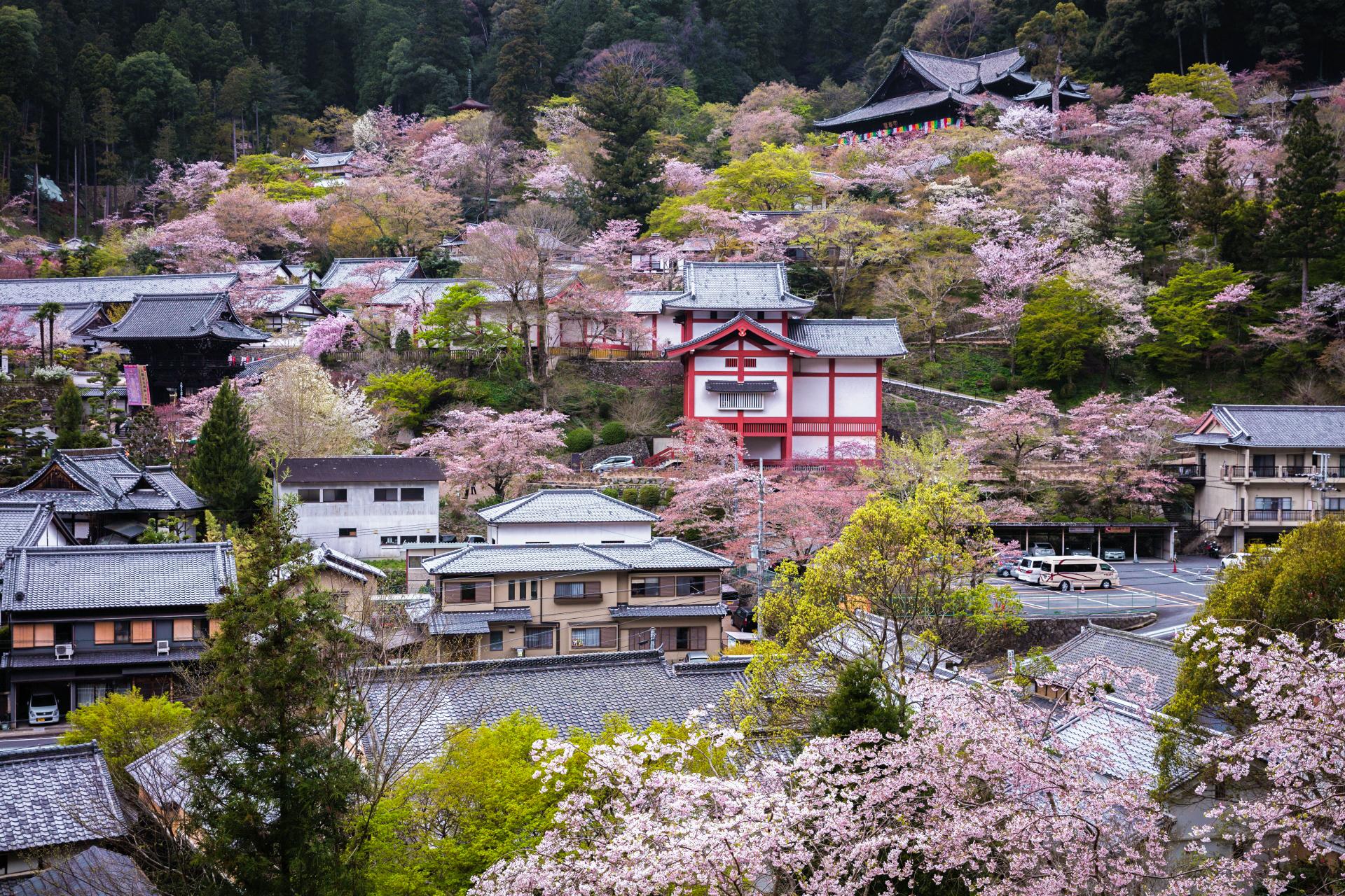 4014275_m 奈良県  長谷寺(境内に約1000本もの桜が咲き誇る春におすすめ桜スポット! 写真の紹介、アクセス情報や駐車場情報など)