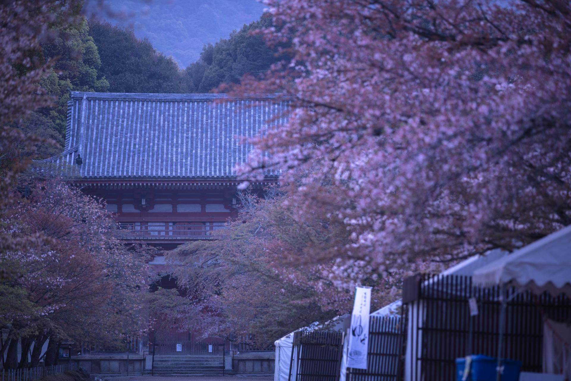 4021042_m 京都府 醍醐寺(花の醍醐と呼ばれる桜の景色が美しい春におすすめ写真スポット! 撮影した写真の紹介、アクセス情報など)
