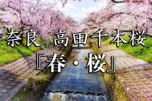 4038041b045794cc9e7ba3de9ad0f40f-300x200 高田千本桜