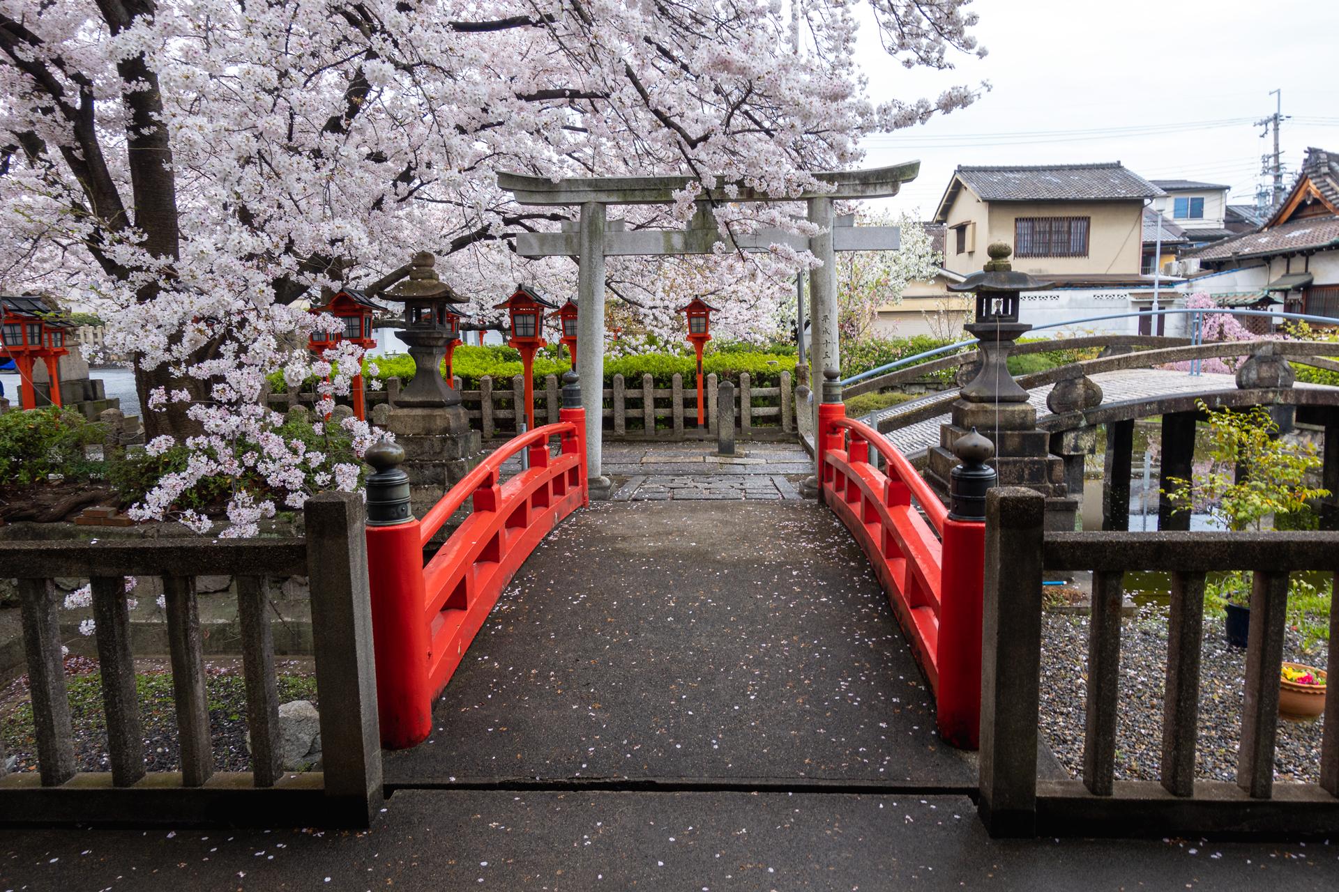 DSC05201 京都府 六孫王神社(桜と灯籠の景色が美しい春におすすめ写真スポット! 撮影した写真の紹介、アクセス情報など)