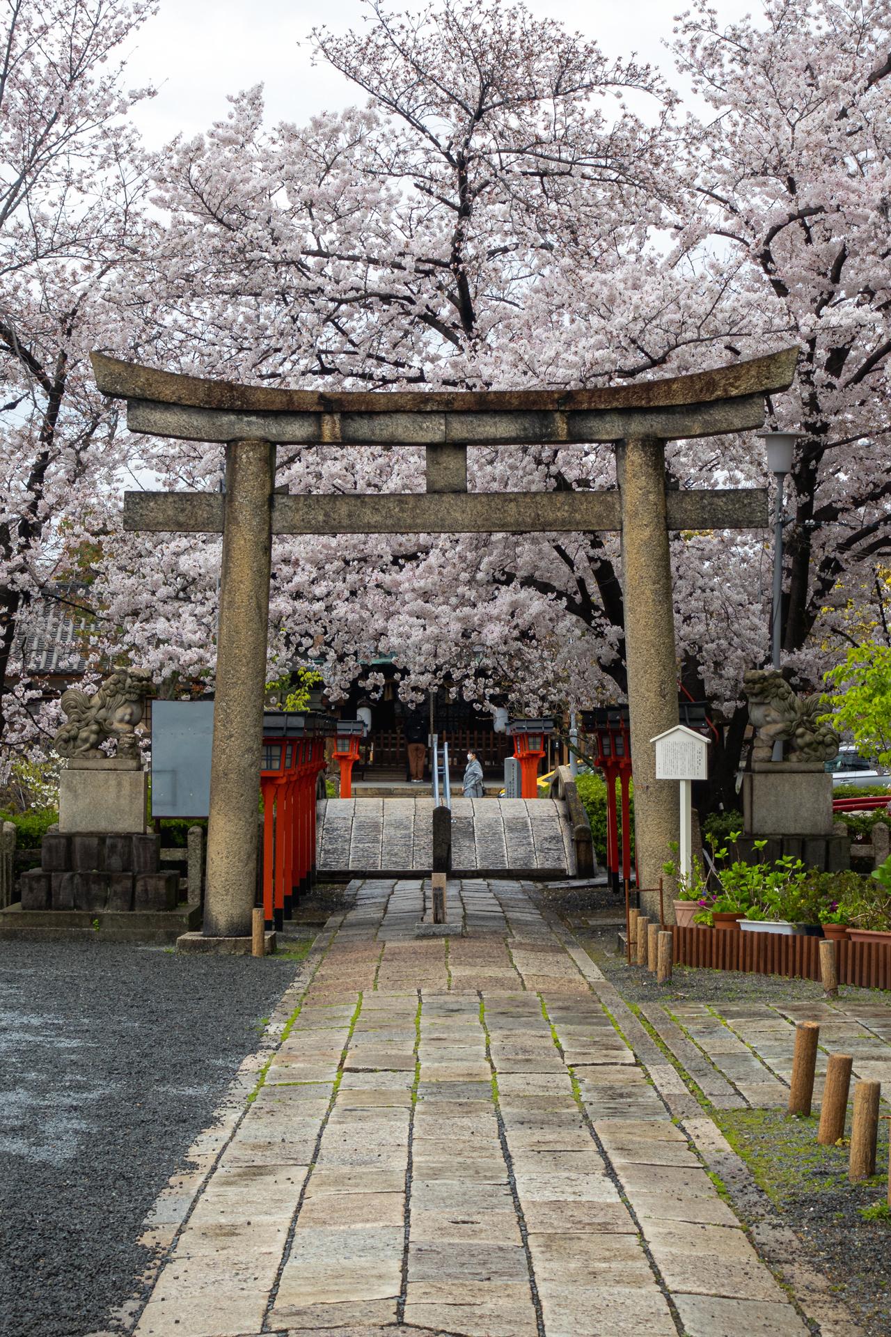 DSC05274 京都府 六孫王神社(桜と灯籠の景色が美しい春におすすめ写真スポット! 撮影した写真の紹介、アクセス情報など)