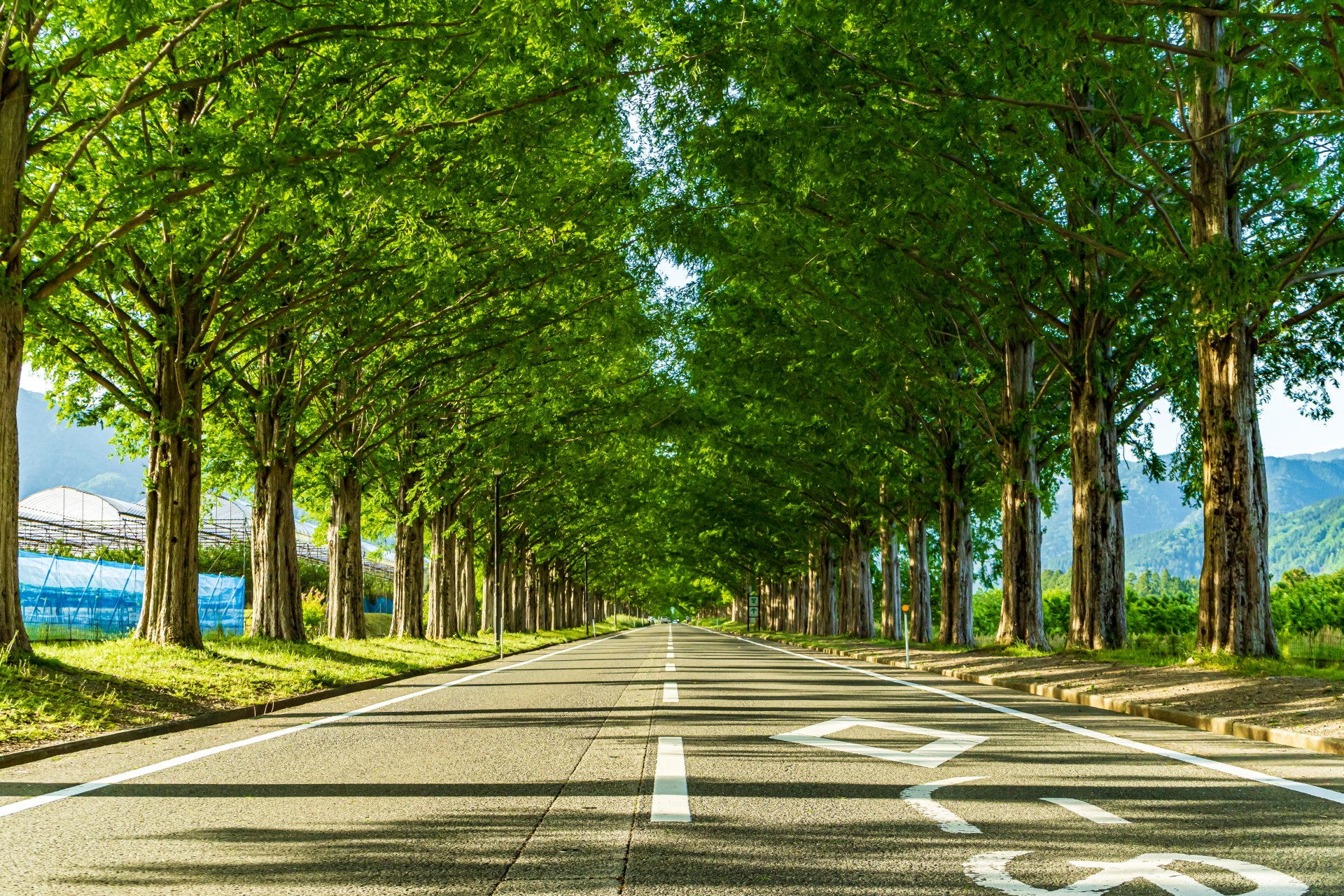 2494320_m 滋賀県  メタセコイア並木(約2.4km続く絶景のメタセコイア並木! 新緑の季節におすすめのスポット。 写真の紹介、アクセス情報や駐車場情報など)