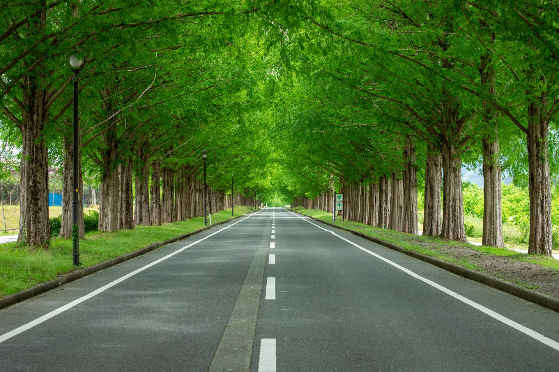 3538679_m 滋賀県  メタセコイア並木(約2.4km続く絶景のメタセコイア並木! 新緑の季節におすすめのスポット。 写真の紹介、アクセス情報や駐車場情報など)