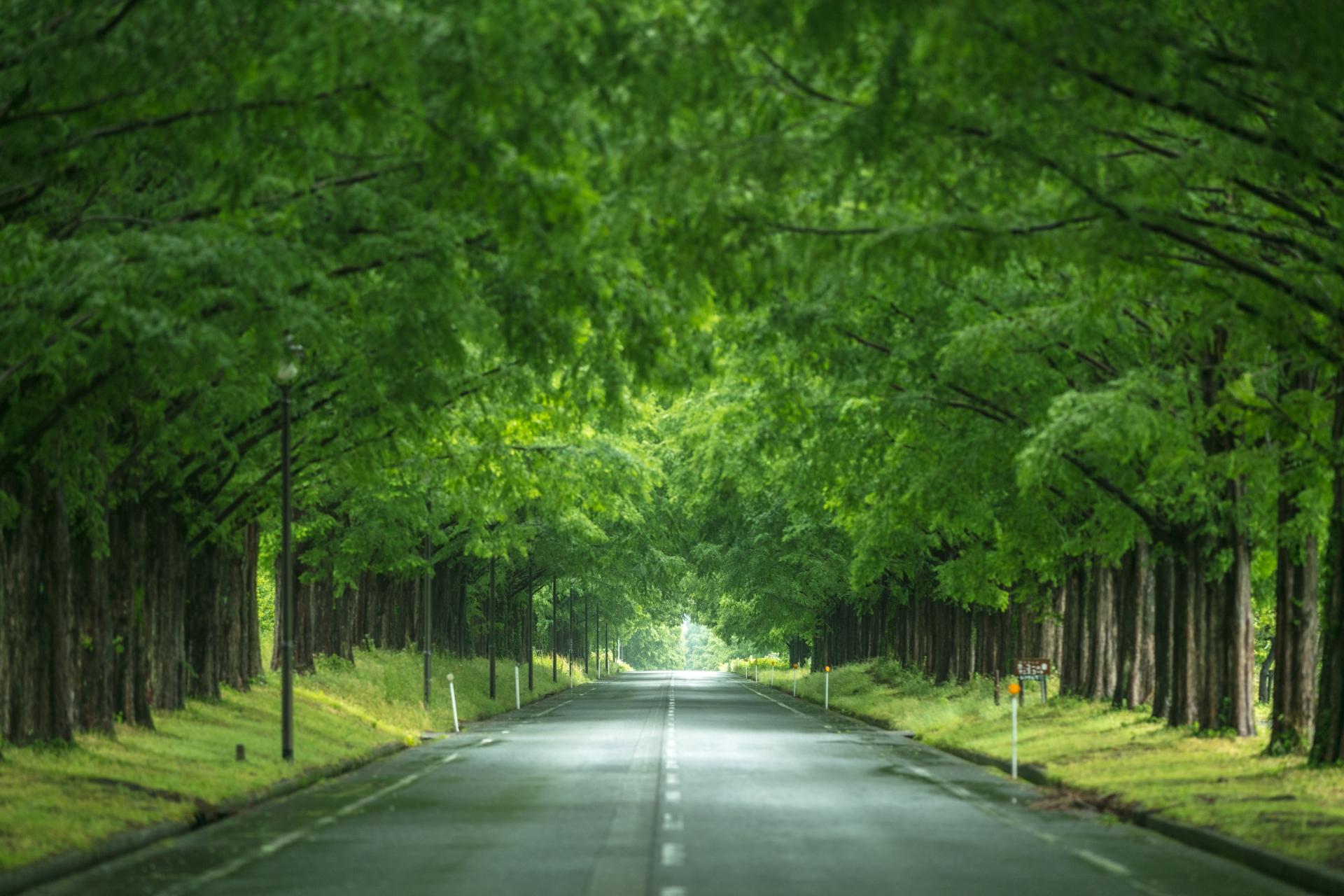 3884241_m 滋賀県  メタセコイア並木(約2.4km続く絶景のメタセコイア並木! 新緑の季節におすすめのスポット。 写真の紹介、アクセス情報や駐車場情報など)