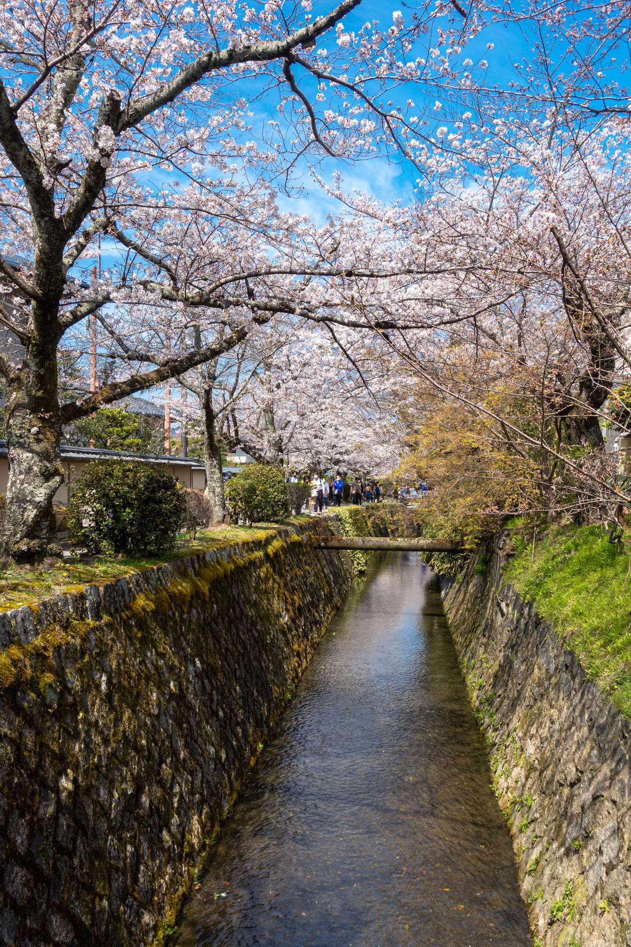 DSC04829 京都府 哲学の道(疎水沿いに咲く桜の並木道が美しい春におすすめ写真スポット! 写真の紹介、アクセス情報など)