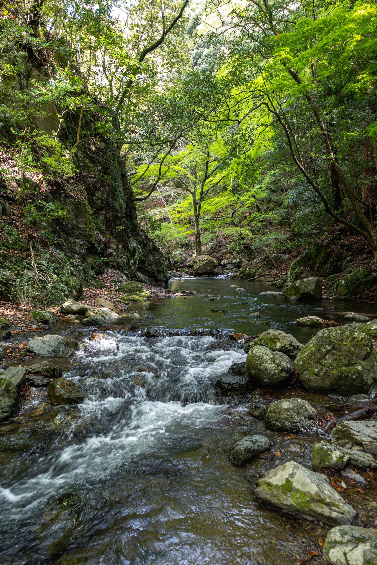 DSC05808 大阪府 箕面大滝(日本の滝百選に選定された新緑に染まる絶景の滝スポット! 写真の紹介、アクセス情報など)