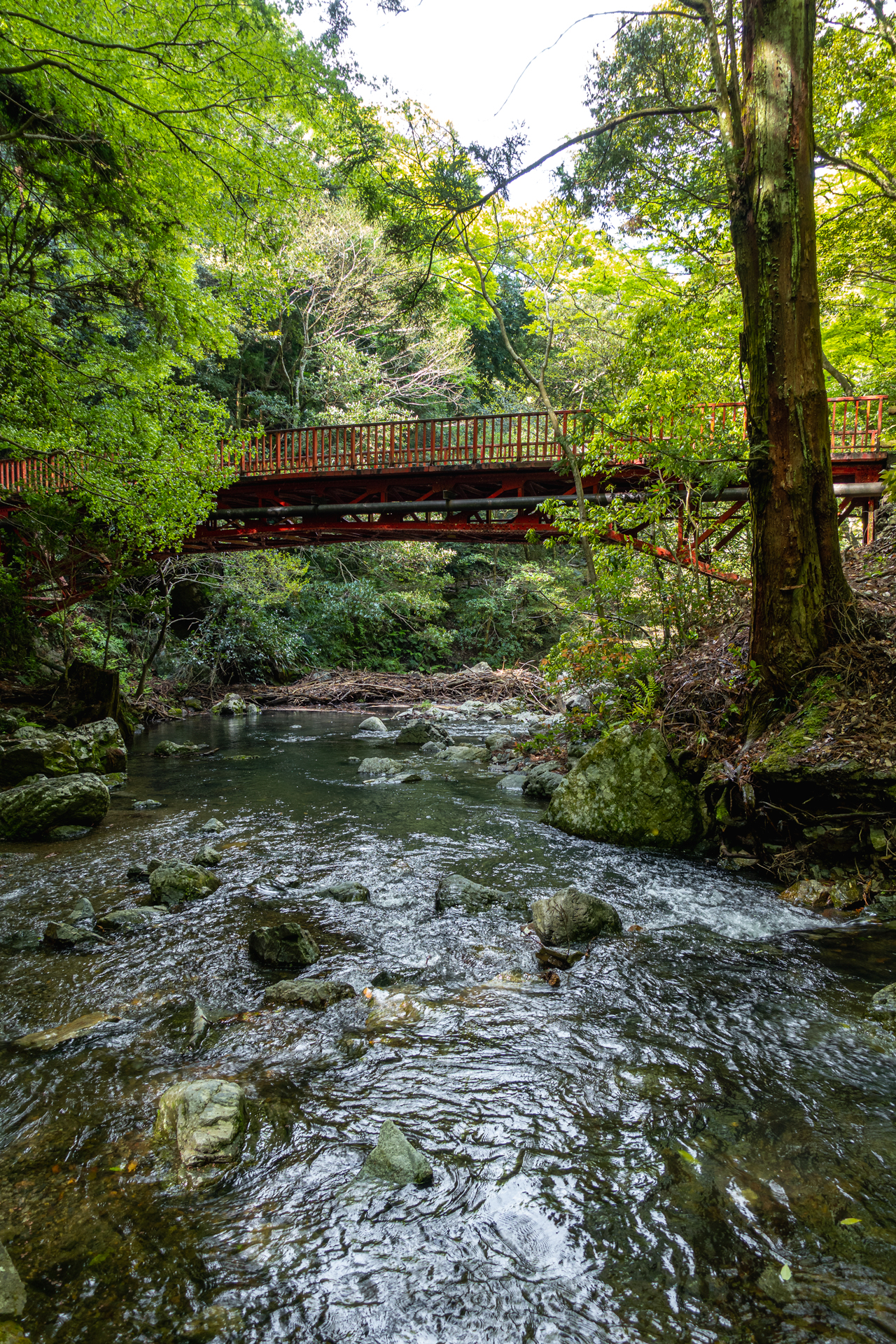DSC05812 大阪府 箕面大滝(日本の滝百選に選定された新緑に染まる絶景の滝スポット! 写真の紹介、アクセス情報など)