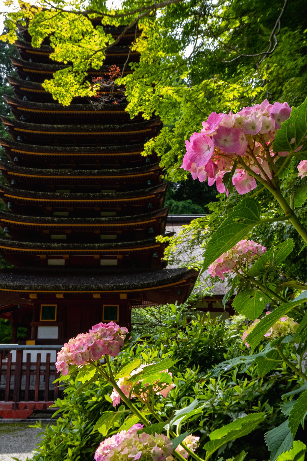 P1001161 奈良県  談山神社(あじさいと新緑の景色が美しい初夏におすすめのスポット! 写真の紹介、アクセス情報や駐車場情報など)