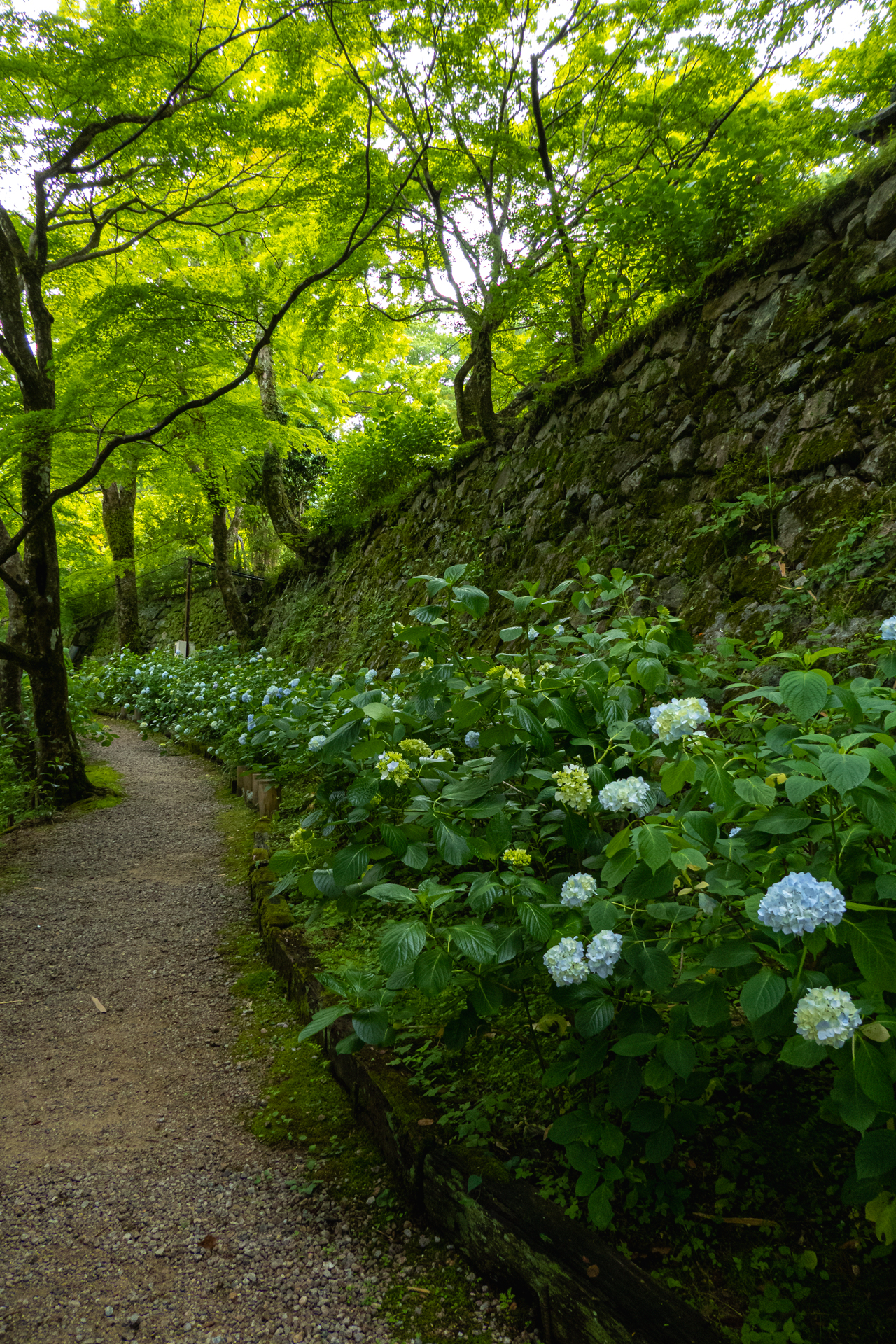 P1001249 奈良県  談山神社(あじさいと新緑の景色が美しい初夏におすすめのスポット! 写真の紹介、アクセス情報や駐車場情報など)