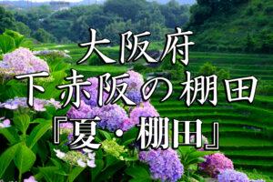 fd16b7864945163cdba88a53a30cf182-300x200 下赤坂の棚田