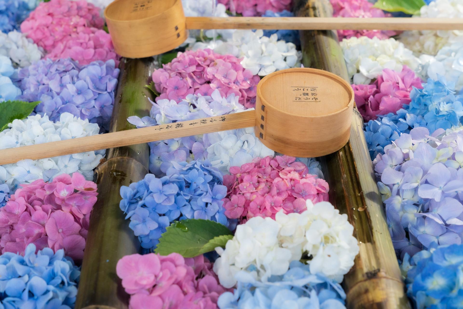 3762552_m 京都府 楊谷寺(境内に5000株のあじさいが咲き誇る初夏におすすめのスポット!写真の紹介、アクセス情報など)