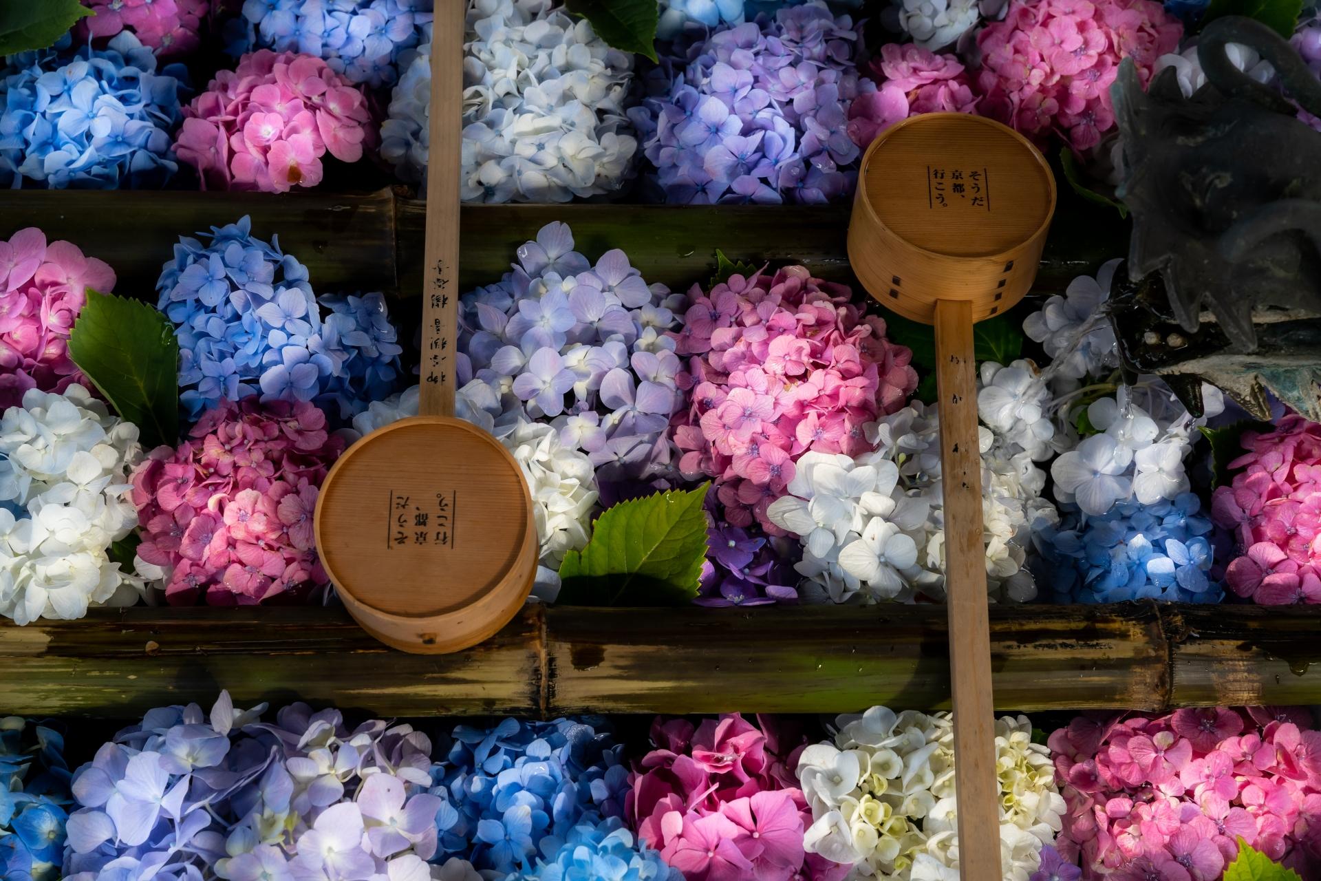 3762553_m 京都府 楊谷寺(境内に5000株のあじさいが咲き誇る初夏におすすめのスポット!写真の紹介、アクセス情報など)