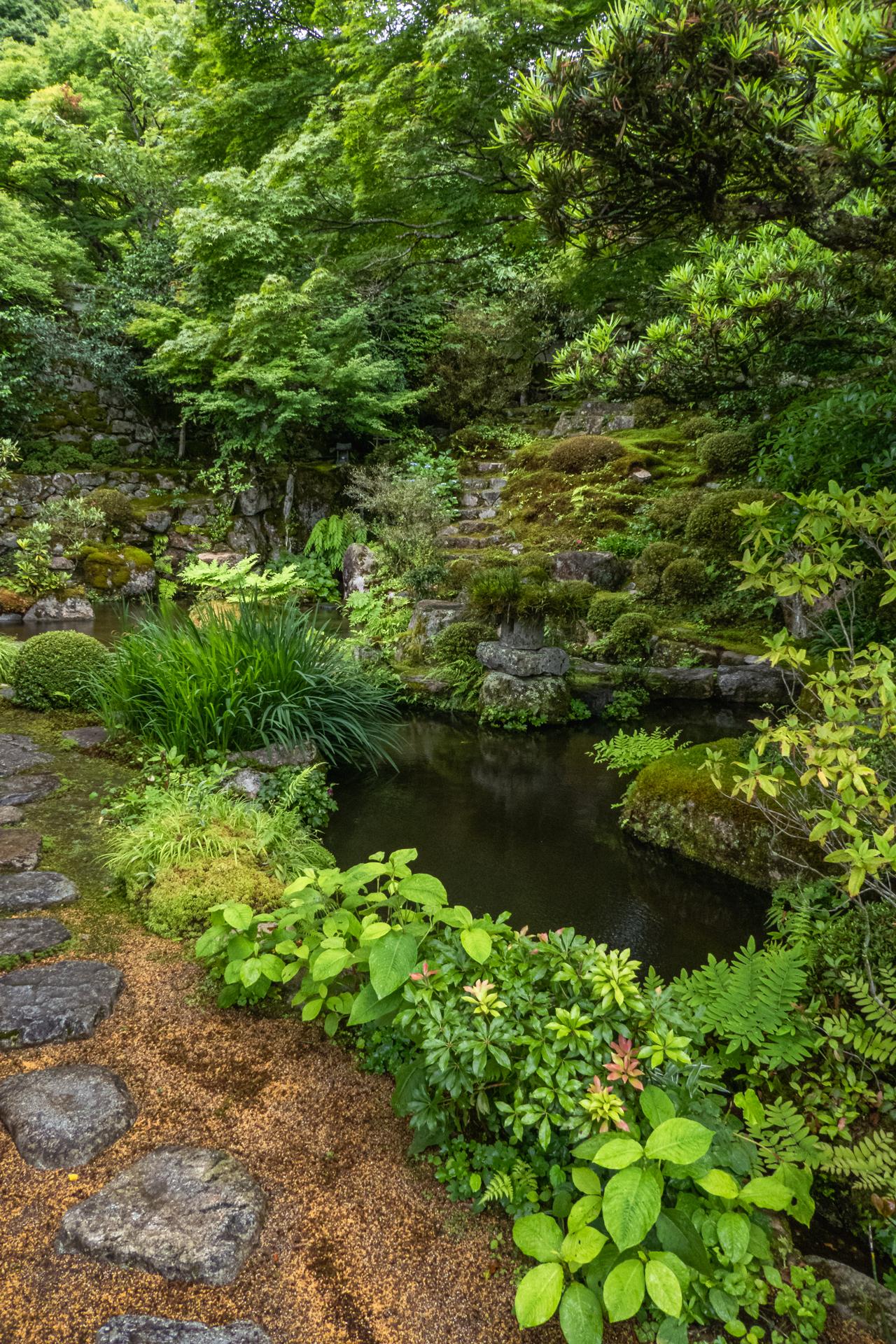 P1001511 京都府 実光院(夏の花が美しく咲く大原のおすすめスポット!写真の紹介、アクセス情報など)