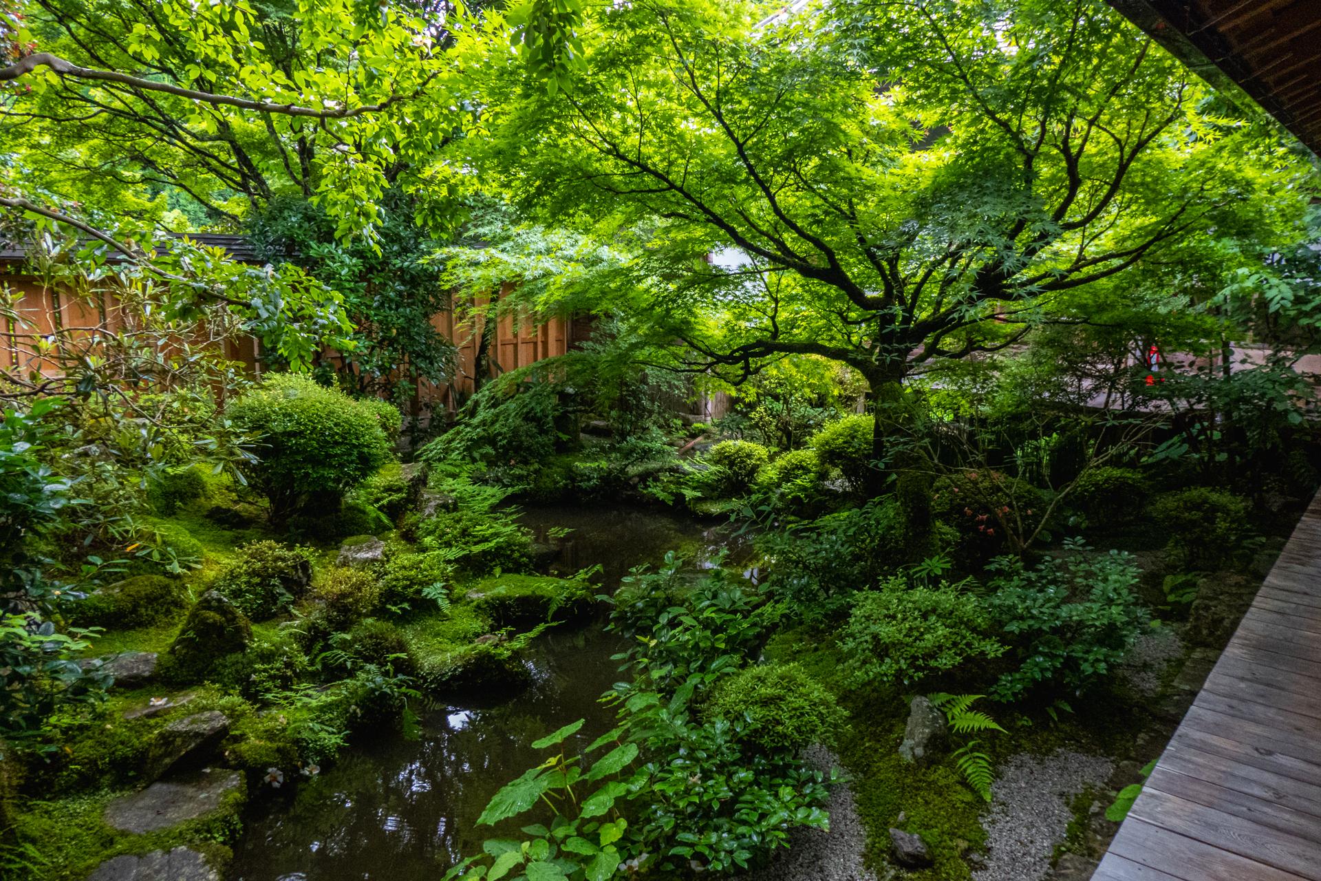 P1001579 京都府 宝泉院(額縁庭園と新緑の景色が美しい夏におすすめスポット!写真の紹介、アクセス情報など)