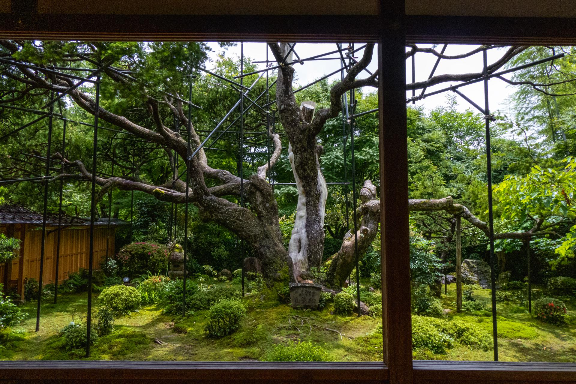 P1001604 京都府 宝泉院(額縁庭園と新緑の景色が美しい夏におすすめスポット!写真の紹介、アクセス情報など)