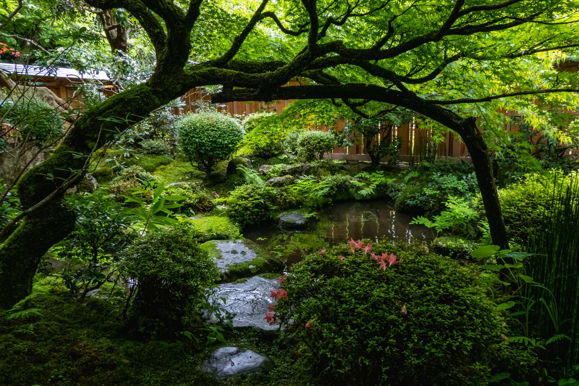 P1001623 京都府 宝泉院(額縁庭園と新緑の景色が美しい夏におすすめスポット!写真の紹介、アクセス情報など)