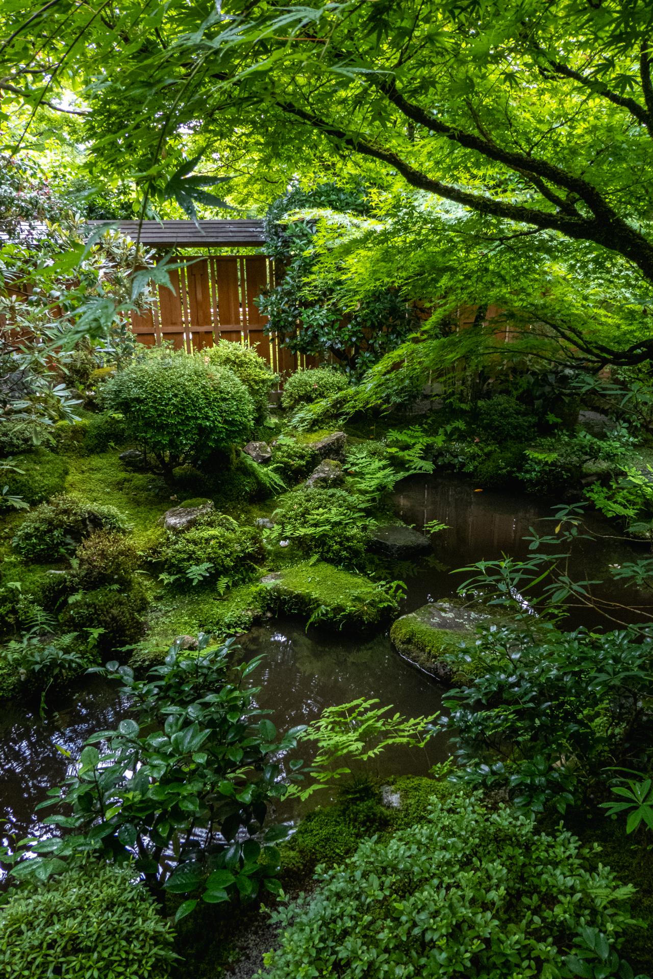 P1001625 京都府 宝泉院(額縁庭園と新緑の景色が美しい夏におすすめスポット!写真の紹介、アクセス情報など)